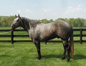 horsefence